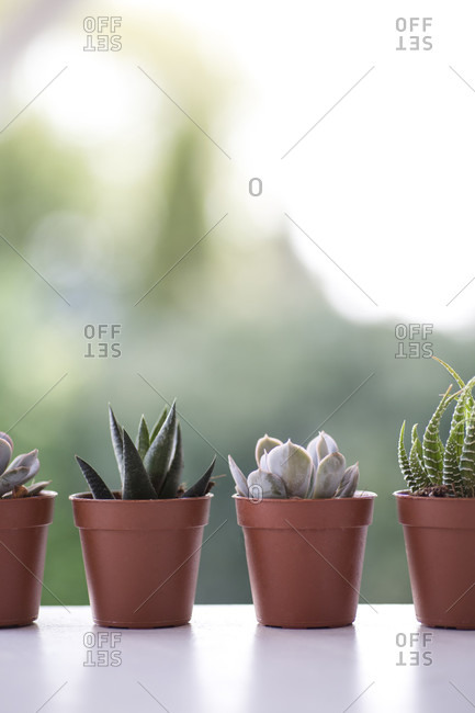 Different types of succulents on a table side by side