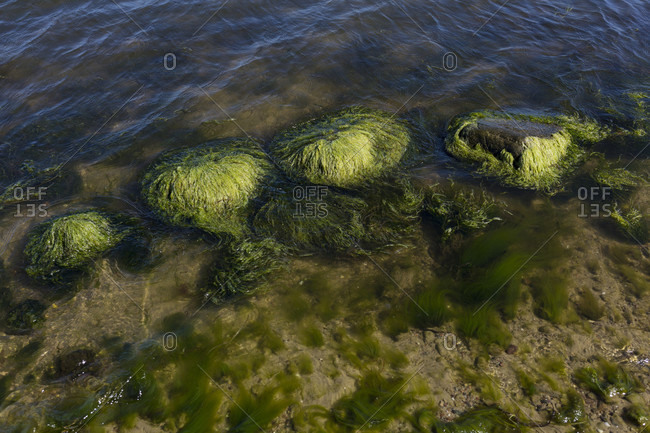 Stones overgrown with algae on the banks of Montegut, Rugen, Germany