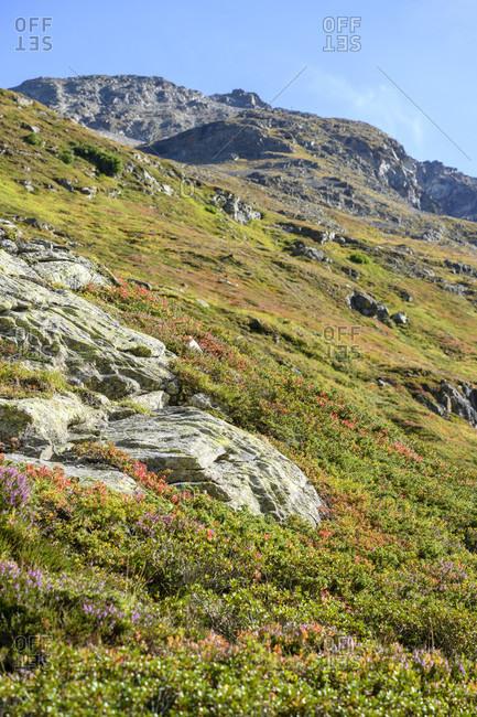 Austria, montafon, landscape above lake silvretta with the typical alpine flora.