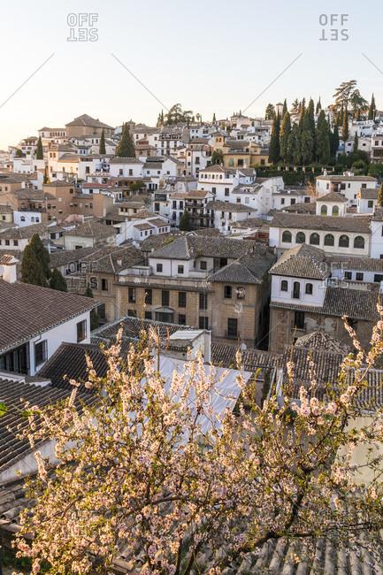 Granada (spain), mirador de la churra, view to the albaicin district, tree blossom