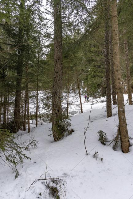 Europe, Austria, berchtesgaden alps, salzburg, werfen, ostpreussenhütte, ski tourers in the light mountain forest