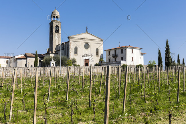 Vineyard in front of the parish church of portese, lake garda, brescia province, lombardy, italy