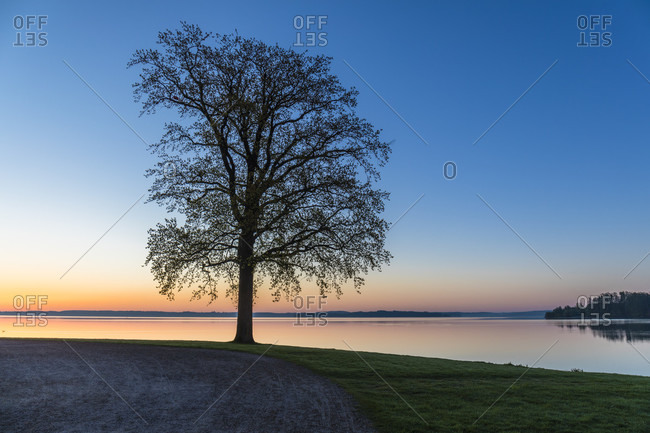 Park on the marstall peninsula with tree silhouette on lake schwerin before sunrise, schwerin, mecklenburg-west pomerania, Germany