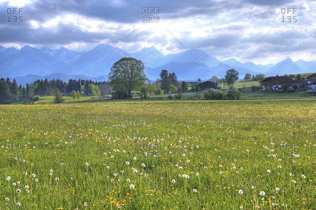 Spring meadow at the hamlet of hegratsried against the tannheim mountains, halblech, romantic road, ostealgia, algae, swabia, bavaria, Germany