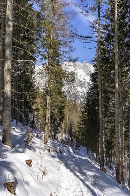 Europe, Austria, berchtesgaden alps, salzburg, werfen, ostpreussenhütte, snowy forest path in the light mountain forest in the ascent to the ostpreussenhütte