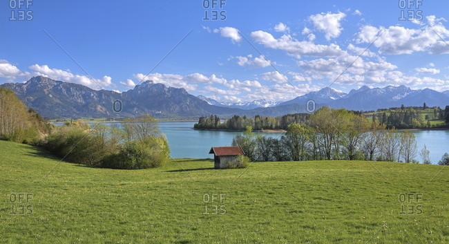 Spring landscape at forggensee against tegelberg (1881m) and sailing (2047m) of the ammergau alps, halblech, romantic road, ostealgia, algae, swabia, bavaria, Germany