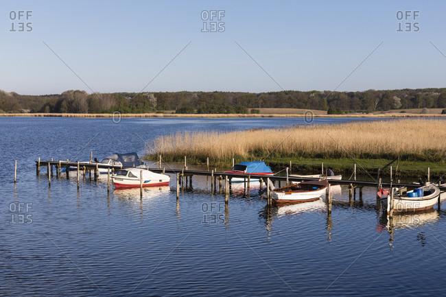 May 4, 2018: fishing boats on the pier in front of a reed belt on lake wreecher, wreechen, ruegen island, mecklenburg-west pomerania, Germany