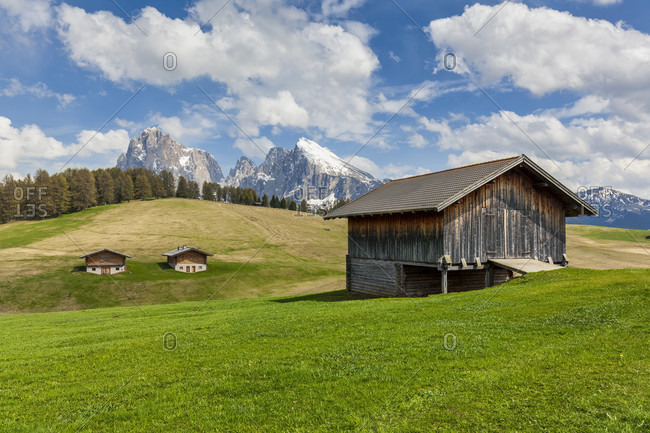 Alpe di siusiseiser alm, characteristic mountain barns with sassolungo / langkofel and the sassopiatto / plattkofel in the background, dolomites, kastelruth, south tyrol, italy