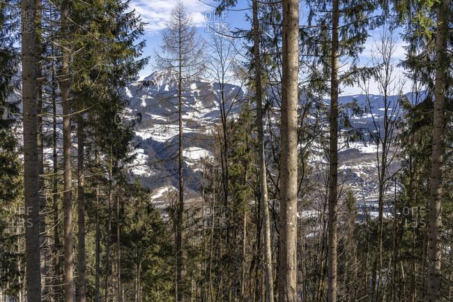 Europe, Austria, berchtesgaden alps, salzburg, werfen, ostpreussenhütte, view through the light mountain forest to the valley basin around the village of werfen and the tennengebirge
