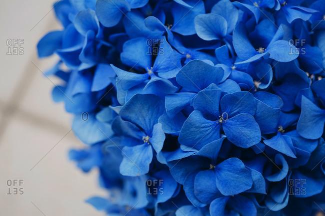Blue hydrangea flower arrangement on table