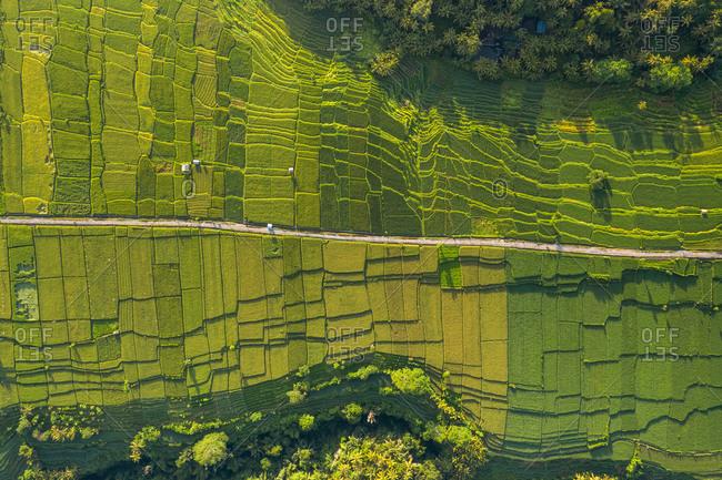 Aerial View Of Bongkasa Rice Terrace In Bali, Indonesia.
