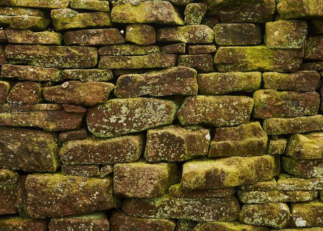 Close up of a dry stone wall covered in bright green lichen