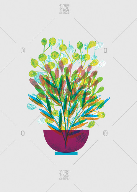 Colorful potted flower illustration with white background