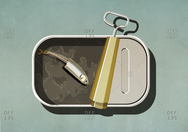 Half eaten sardine in open tin