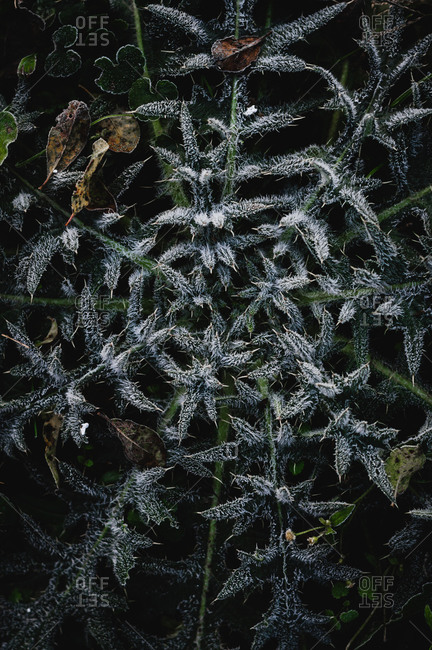 Frost covered plants and leaves, top view