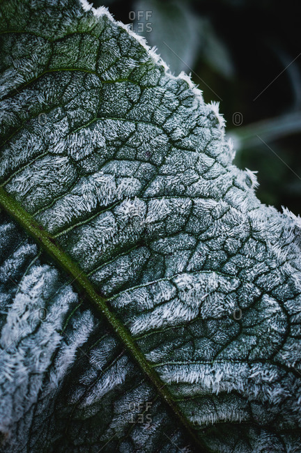 Close up of frost covered plant