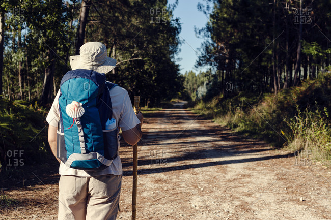 Back view of unrecognizable male traveler with rucksack and wooden stick standing on rough path between trees in summer