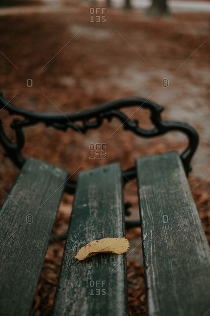 Old wooden bench in alley covered with brown fallen leaves on cloudy day in park