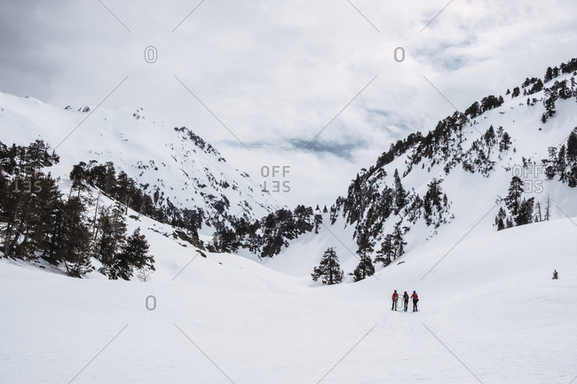 Distant travelers skiing on valley against mountain slope covered with coniferous trees and snow in sunny winter day