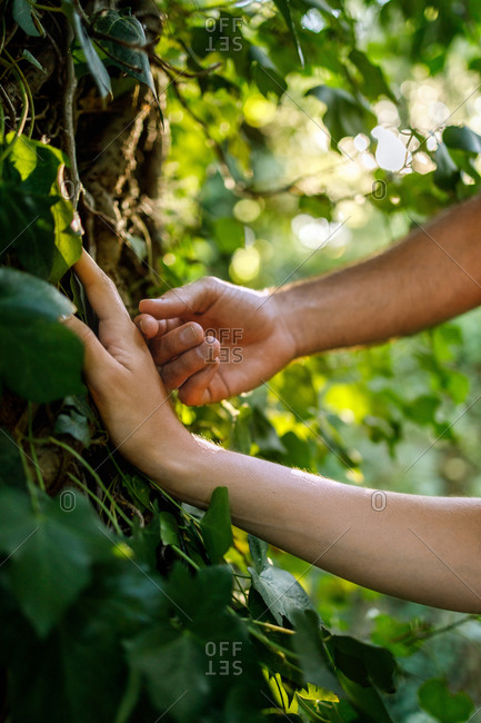 Crop faceless man touching hand of anonymous girlfriend during romantic date in green forest on sunny day