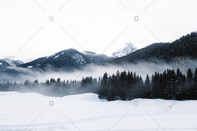 Cold winter scenery of mountain valley with dark coniferous woods and snowy hills during blizzard