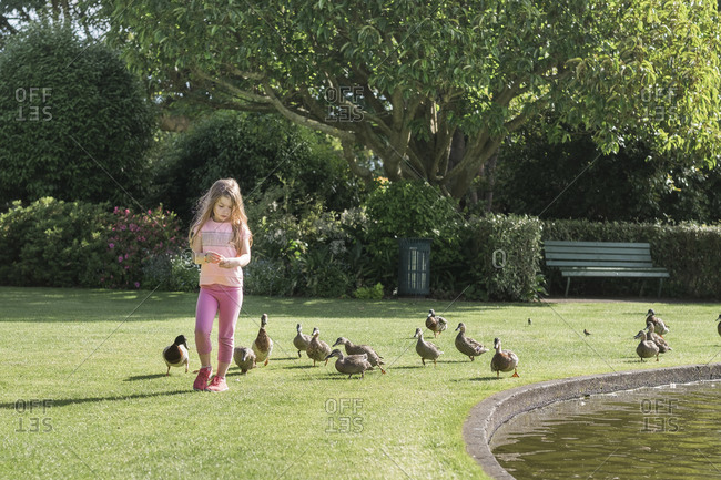 Young girl feeding ducks beside a pond at the park