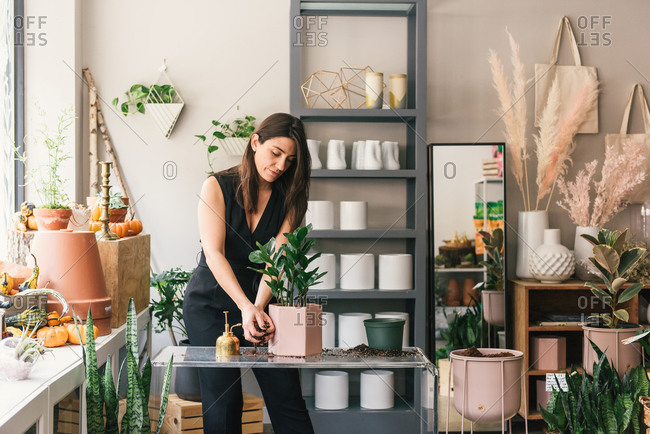 Adult woman planting succulent in pretty stylish pot for demonstration