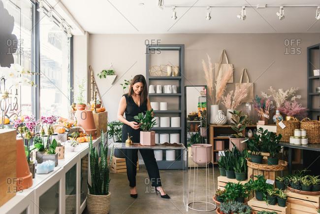 Wide shot of florist putting together potting display in shop