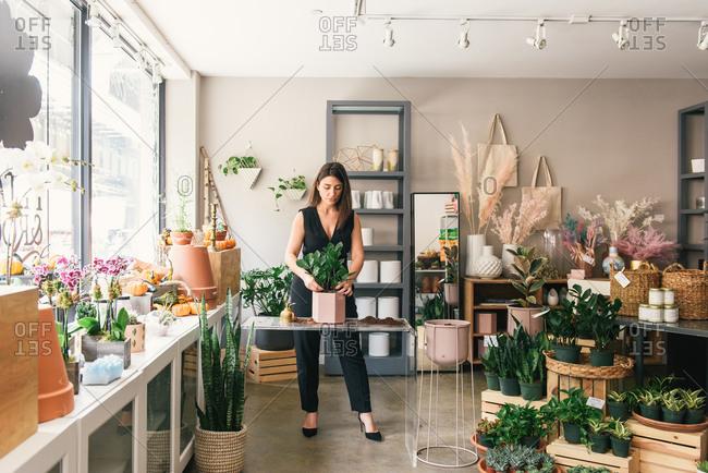 Inside a stylish flower shop with florist potting succulent plant