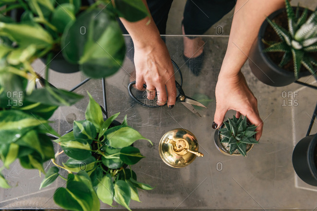 Overhead view of woman holding scissors and plants in flower shop