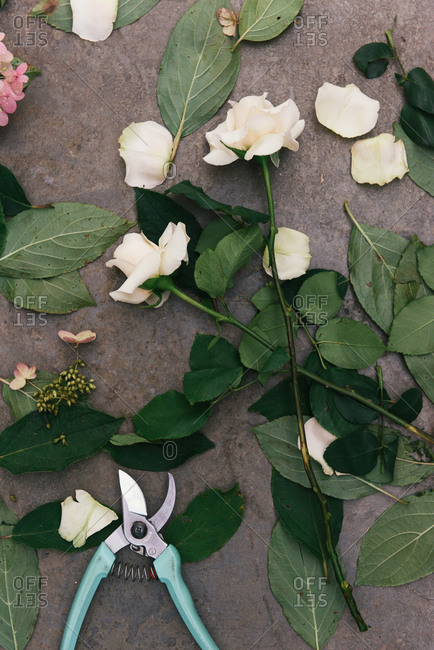 Overhead of pruning scissors and discarded flowers from bouquet
