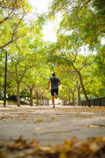 Fit man runs on the main road of a park plenty of leafs at winter