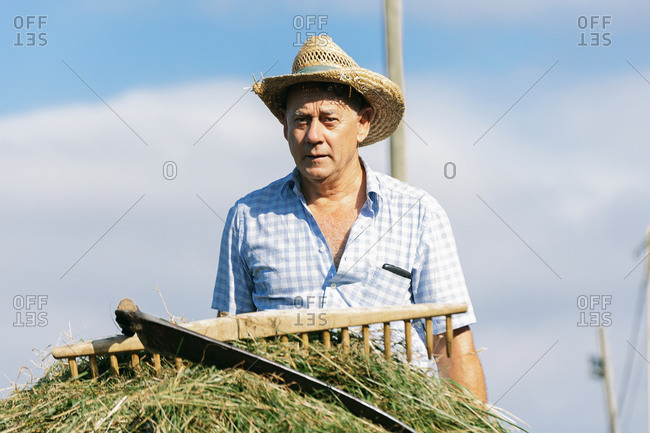 Farmer with grass to feed his donkeys. sustainable agriculture
