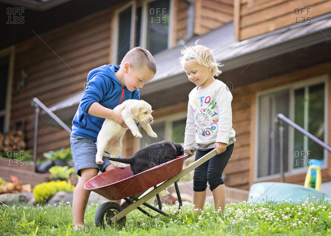 Boy and girl playing with lab puppies