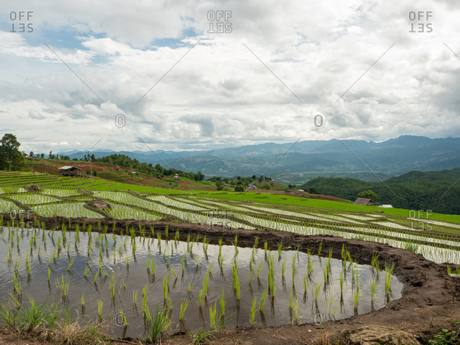 Cloud sky and rice terraces