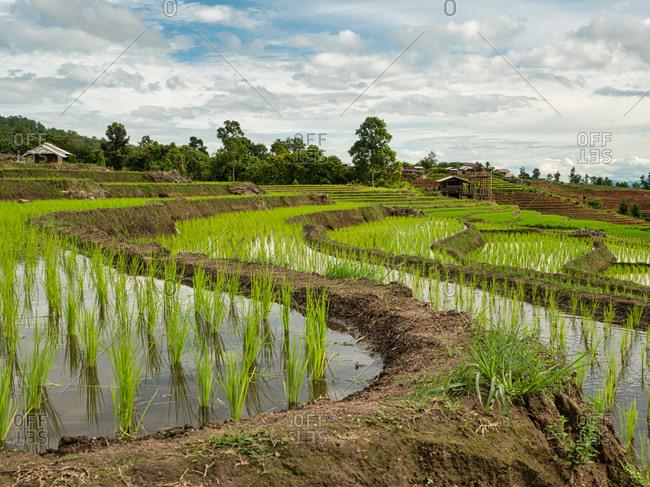 The ridges of rice terraces at pa bong piang