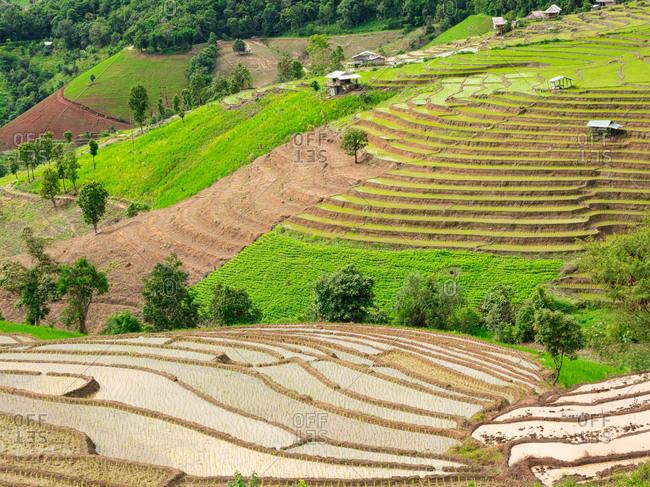 Pa bong piang rice terraces  landscape