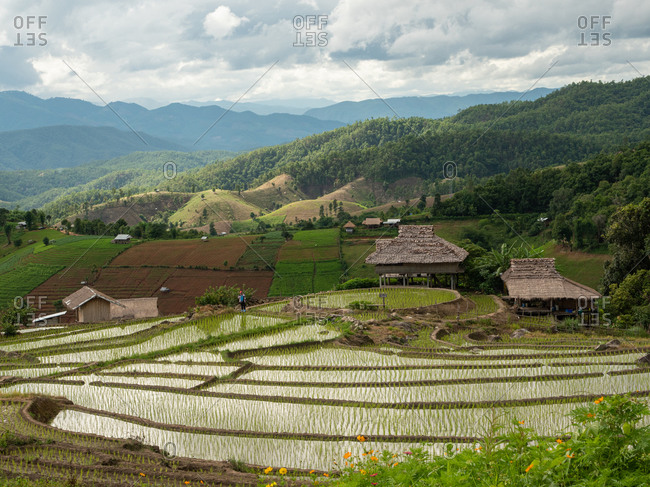 The rice field on the mountain