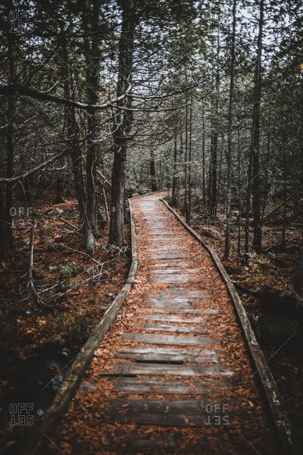 Old wooden boardwalk through ancient forest baxter state park, Maine