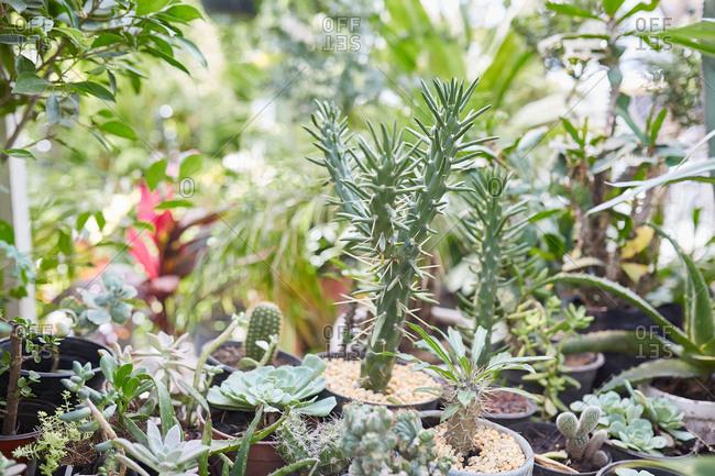 Succulents cactus and house plants