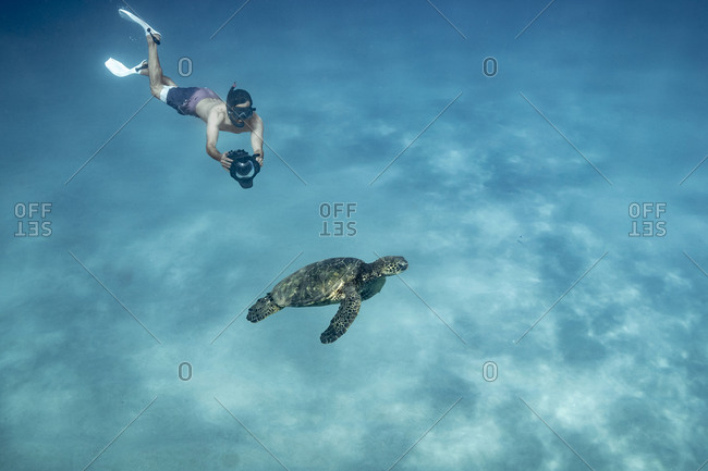 Underwater photographer free diving and photographing sea turtle
