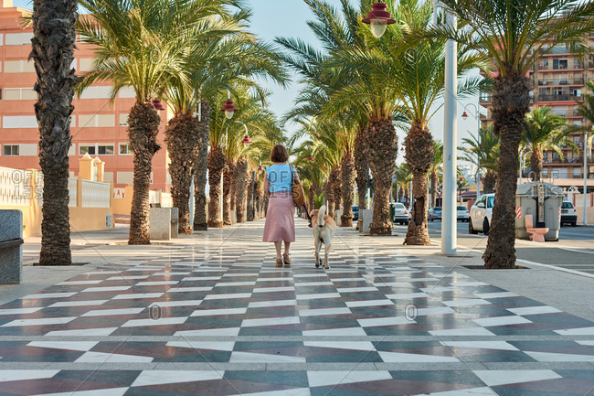 Woman walks her dog in a street surrounded by palm trees