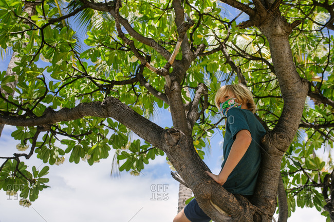 Tween Boy sits alone in a tree in Hawaii while wearing a colorful mask