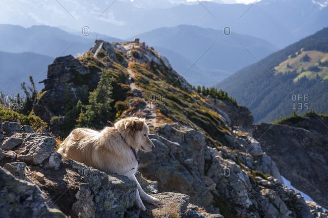 Dog on the summit of Johnson mountain