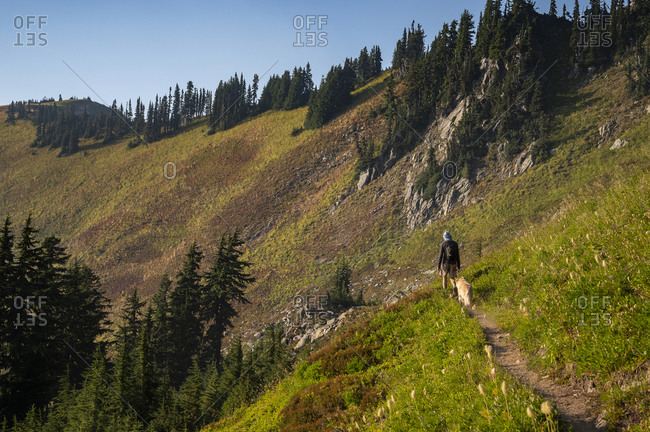 Hiker and dog on trail through open alpine meadow