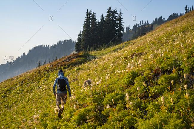 Male Hiker Walking Through Alpine Meadow With Wildflowers