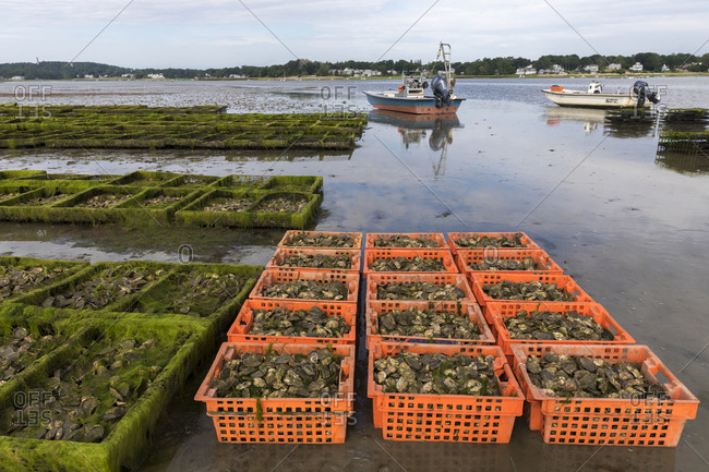 Duxbury, MA, United States - July 23, 2020: Oyster farm scene with crates and cages of oysters