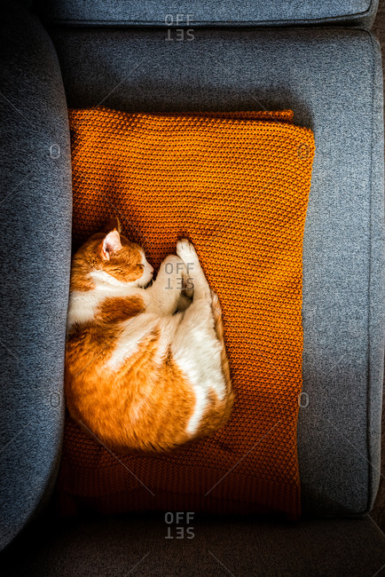 Orange and white cat sleeping on a blanket on a couch inside a house
