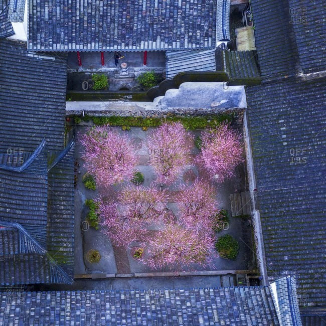 Plum blossom reflected ancient temples in one hundred