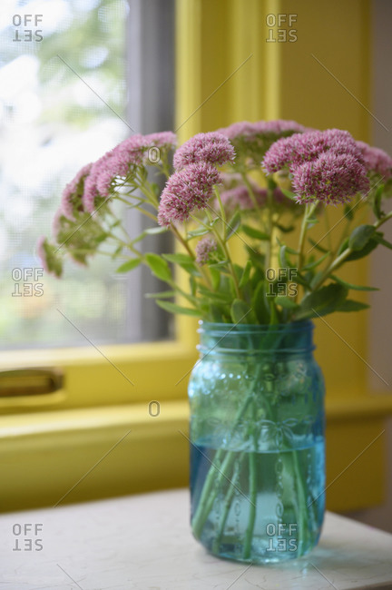 Pink flowers in vase on table